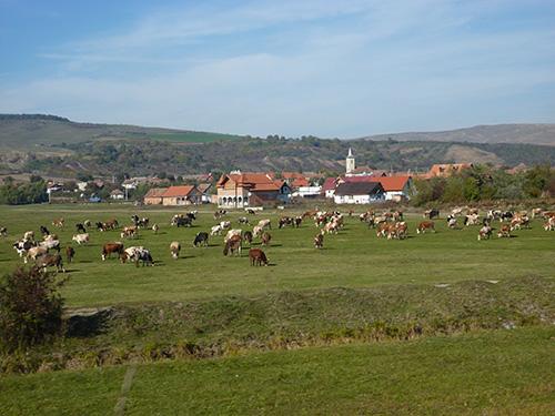 La campagne de Roumanie entre Sighisoara et Cluj