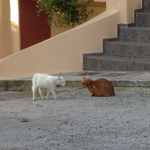 les chats d'Athènes