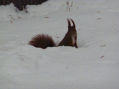Ecureuil dans le parc de Varsovie
